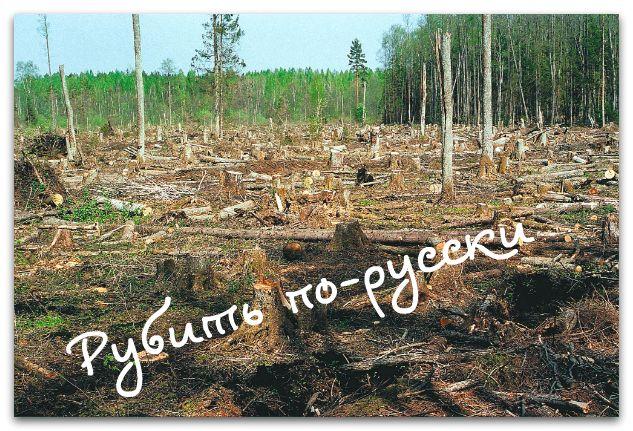 Новые правила игры в лесозаготовительной отрасли