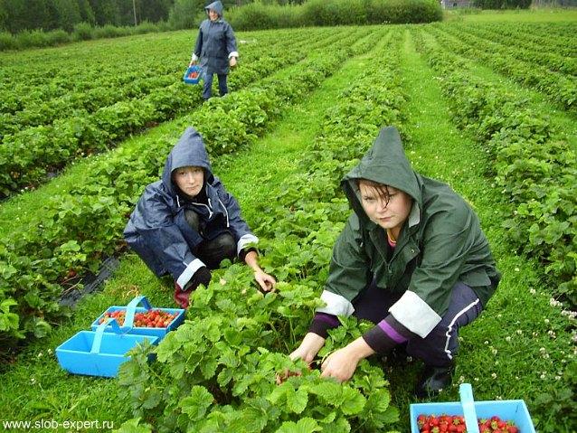 Сезонная работа: особенности заключения и расторжения трудового договора