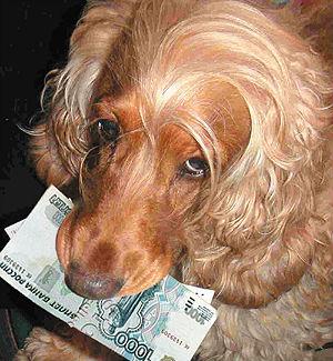 «Собачьи налоги» или заплати за домашнего любимца